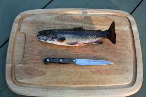 fische räuchern 2