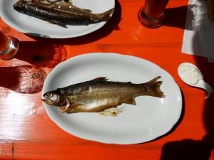fische räuchern 5
