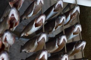 Forellen räuchern